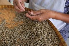 Brieten THAILÄNDISCHE Kaffeebohnen des Konzeptes, Hintergrundbeschaffenheit, die Kaffeebohne für das Licht, das gebraten wurde, M Lizenzfreie Stockfotos