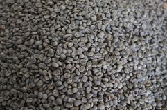 Brieten THAILÄNDISCHE Kaffeebohnen des Konzeptes, Hintergrundbeschaffenheit, die Kaffeebohne für das Licht, das gebraten wurde, M Lizenzfreie Stockfotografie