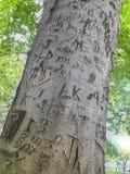 Brieven in een boom worden gesneden die stock afbeeldingen