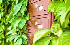 Brievenbussen op de muur tussen de druivenbladeren Royalty-vrije Stock Foto's