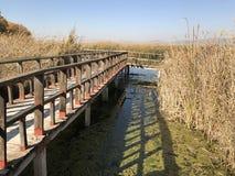 brigde au-dessus de petit lac images libres de droits