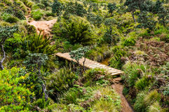 Brigde in Horton plains Stock Image