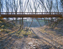 Brige在森林里 免版税库存图片