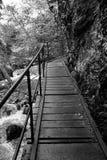 Brige στο Ravennaschlucht στο γερμανικό μαύρο δάσος Στοκ εικόνες με δικαίωμα ελεύθερης χρήσης