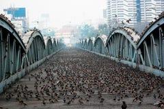Brige de Ellis: Estrutura da herança, Ahmedabad, Índia Imagem de Stock Royalty Free