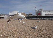 Brigghton, Inglaterra - gaivotas e Brighton Pier Fotos de Stock