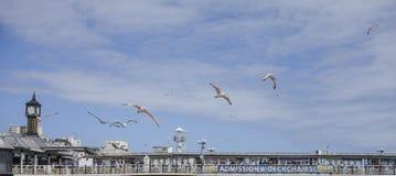 Brigghton, Inglaterra - gaivotas e os céus azuis Fotos de Stock Royalty Free