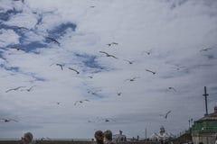 Brigghton, Inglaterra - gaivotas no ar Fotos de Stock