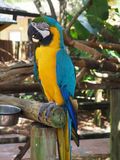 Brigh colored macaw parrot Stock Images