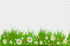 BrighGrass and flowers border, greeting card decoration element for Easter on a Transparent Background. Vector. Grass and flowers border, greeting card royalty free illustration