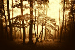 BrighSunset in a dark forest with fog in autumn Stock Photos