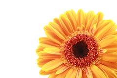 Bright Stock Image