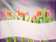 Bright abstract background with tulip flowers and banner Royalty Free Stock Photos