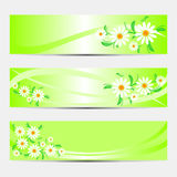 Bright abstract Banners with Camomiles. Stock Image