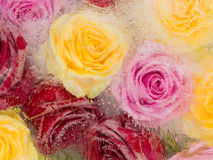 Bright abstraction with frozen roses stock photos