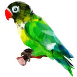 Bright African parrot on a branch Royalty Free Stock Photography