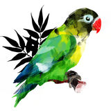 Bright African parrot on a branch Royalty Free Stock Photos