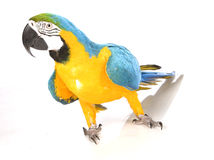 Bright Ara parrot Stock Photos