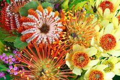 Bright Australian native flowers. Close-up of a colorful bouquet with the variety of Australian native flowers Royalty Free Stock Photo