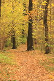 Bright Autumn. Path littered with fallen leaves in autumn forest Stock Images