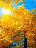 Bright autumn Royalty Free Stock Photos