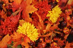 Bright autumn background Royalty Free Stock Photography