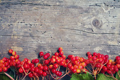 Bright autumn background with berries viburnum Stock Photo