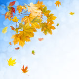 Bright autumn background Royalty Free Stock Images