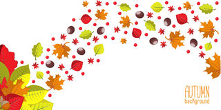 Bright autumn background for invitation or ad template with wreath from leaves, seeds and nuts. Stock Photography