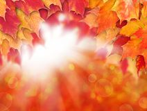 Bright autumn background. Red fall maple leaves and abstract bokeh light royalty free stock photos