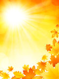 Bright autumn background Royalty Free Stock Image
