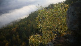 Bright autumn Birch leaves on a branch fluttering in the wind.  stock video footage