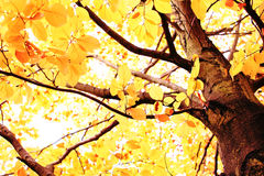 Bright autumn canopy Royalty Free Stock Photography