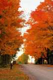 Bright Autumn Colored Trees on Side of Road Royalty Free Stock Photo