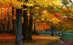 Bright autumn colors Royalty Free Stock Photo