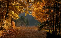 Free Bright Autumn Colors Stock Image - 10858481