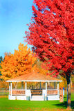 Bright Autumn Colors Stock Image