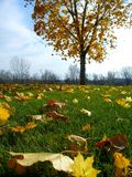 Bright Autumn Day. Leaves fall from a tree on green grass. Slightly overexposed to focus on grass stock photos