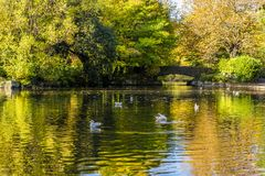 A bright Autumn day in St Stephen`s Green Park, Dublin, Ireland. A bright Autumn day watching the ducks in St Stephen`s Green Park, Dublin, Ireland royalty free stock photography