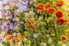 Bright autumn floral natural background with orange and purple f stock images