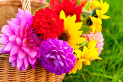 Bright autumn flowers in the basket Stock Photography