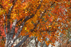 Bright autumn foliage Royalty Free Stock Photos