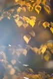 Bright autumn foliage Stock Photo