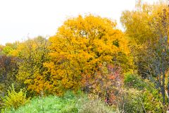 Bright autumn foliage in Gorokhovets. Bright autumn foliage. Gorokhovets, Vladimir oblast, Russia Stock Photography