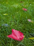 Bright autumn foliage on a green lawn. royalty free stock images