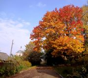 Bright autumn Royalty Free Stock Photo