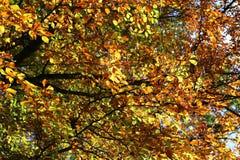 Bright autumn foliage. Bright autumn foliage on trees. Bright autumn foliage on trees stock photography