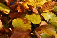 Bright autumn foliage. Bright autumn foliage on trees. Bright autumn foliage on trees royalty free stock photos