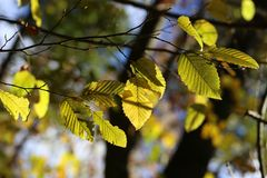 Bright autumn foliage. Bright autumn foliage on trees. Bright autumn foliage on trees royalty free stock images