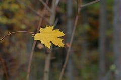 Bright autumn foliage. Bright autumn foliage on trees. Bright autumn foliage on trees royalty free stock image